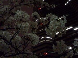 Sakurasakragicho